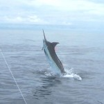 IFGAs 2006 Worlds Best Captain anglers marlin catch.