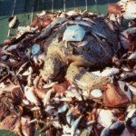 Sea Turtles May Finally Win from Shrimp Trawlers in Costa Rica