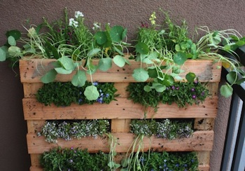 Reuse wood pallets 22 upcycled pallet wood ideas green - Reusing pallets in the garden ...