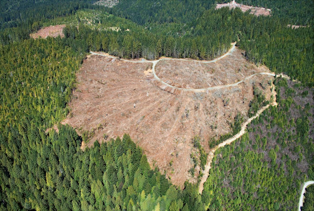 New Hampshire and Deforestation