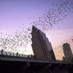The Importance of Bats To Economy And The Environment