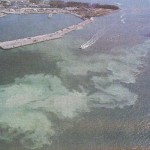 Cruise Ships Illegally Dumping 1 Billion Gallons Of Sewage In The Ocean Yearly