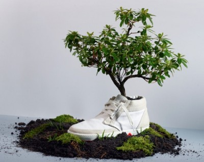 Oat biodegradable shoes