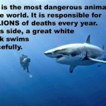 Shark Awareness Day is July 14