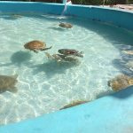 Mexico's Sea Turtles